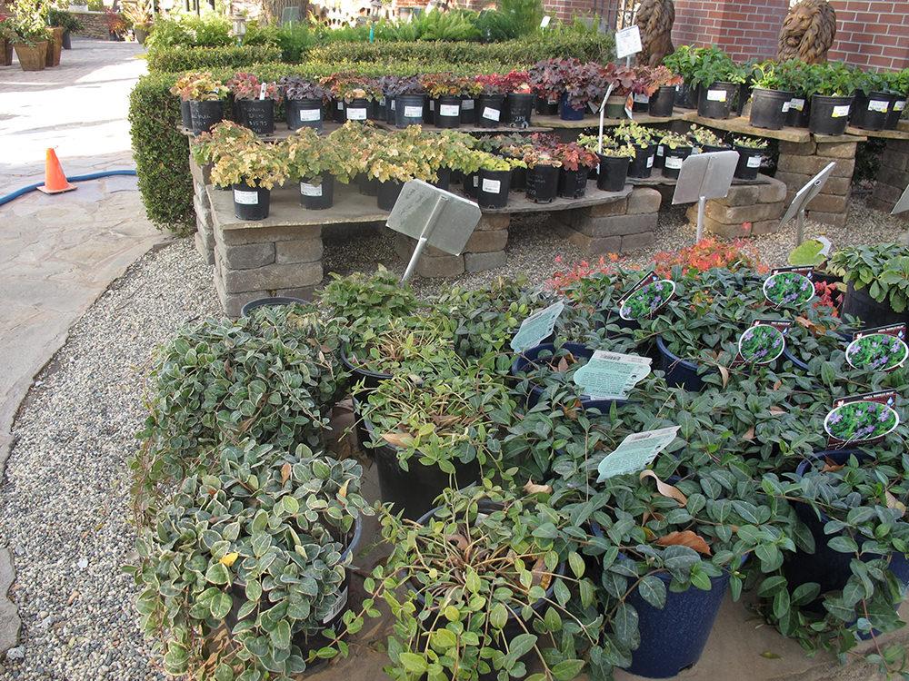 Bricks Garden Center Quakertown Hours : Silverado building materials nursery